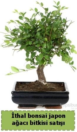 İthal bonsai saksı çiçeği Japon ağacı satışı  Gaziantep uluslararası çiçek gönderme