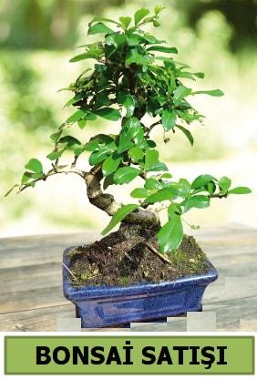 Çam bonsai japon ağacı satışı  Gaziantep çiçek servisi , çiçekçi adresleri