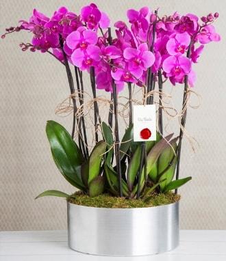 11 dallı mor orkide metal vazoda  Gaziantep 14 şubat sevgililer günü çiçek