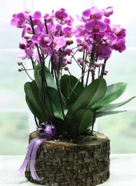 Kütük içerisinde 6 dallı mor orkide  Gaziantep kaliteli taze ve ucuz çiçekler