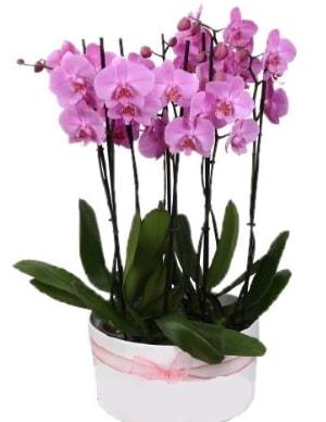 Beyaz seramik içerisinde 7 dallı mor orkide  Gaziantep çiçek online çiçek siparişi