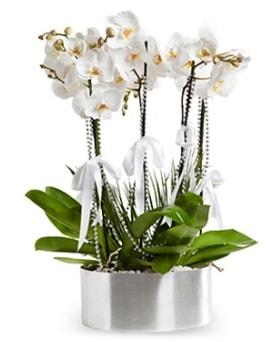 Beş dallı metal saksıda beyaz orkide  Gaziantep anneler günü çiçek yolla