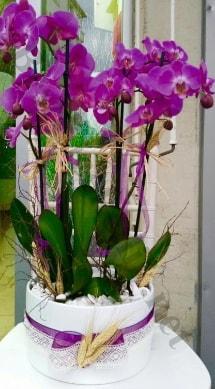 Seramik vazoda 4 dallı mor lila orkide  Gaziantep çiçek gönderme