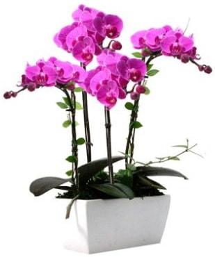 Seramik vazo içerisinde 4 dallı mor orkide  Gaziantep çiçek servisi , çiçekçi adresleri