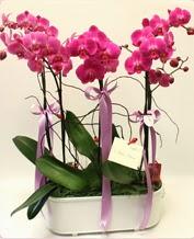 Beyaz seramik içerisinde 4 dallı orkide  Gaziantep kaliteli taze ve ucuz çiçekler