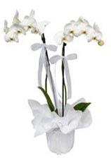 2 dallı beyaz orkide  Gaziantep çiçek siparişi vermek