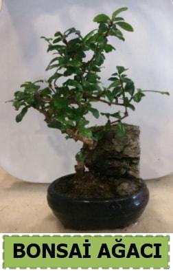 Bonsai ağacı japon ağacı satışı  Gaziantep güvenli kaliteli hızlı çiçek