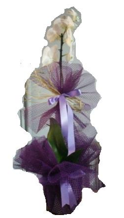 Tek dallı beyaz orkide süper kalite ithal  Gaziantep online çiçekçi , çiçek siparişi