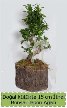 Doğal kütükte İthal bonsai japon ağacı  Gaziantep hediye sevgilime hediye çiçek