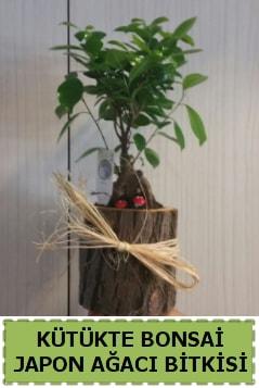 Kütük içerisinde doğal bonsai ağacı  Gaziantep çiçek online çiçek siparişi