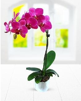 Tek dallı mor orkide  Gaziantep çiçek servisi , çiçekçi adresleri