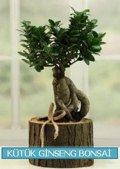 Kütük ağaç içerisinde ginseng bonsai  Gaziantep 14 şubat sevgililer günü çiçek