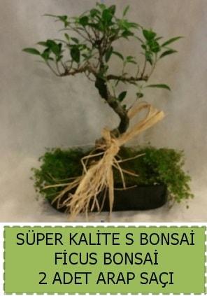 Ficus S Bonsai ve arap saçı  Gaziantep çiçek online çiçek siparişi