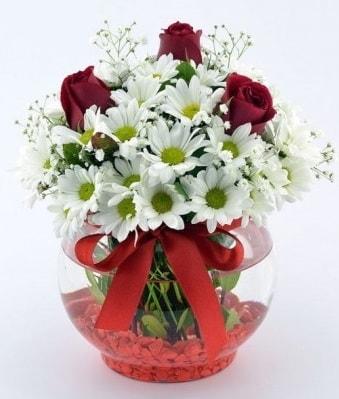 Fanusta 3 Gül ve Papatya  Gaziantep çiçek yolla , çiçek gönder , çiçekçi