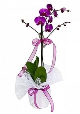 Tekli Mor Orkide  Gaziantep anneler günü çiçek yolla