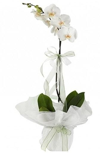 Tekli Beyaz Orkide  Gaziantep güvenli kaliteli hızlı çiçek