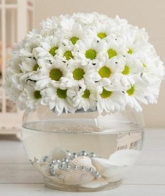 Fanusta beyaz Papatya  Gaziantep çiçek servisi , çiçekçi adresleri