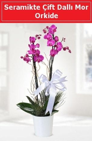 Seramikte Çift Dallı Mor Orkide  Gaziantep hediye çiçek yolla